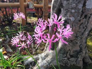 安産寺に咲く花