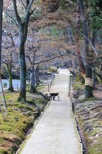唐招提寺境内の通路