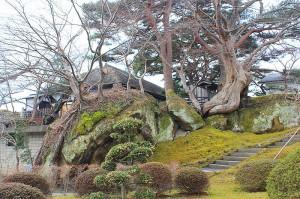 観潤亭の樹木