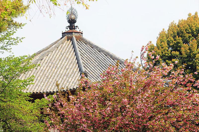 北円堂と八重桜