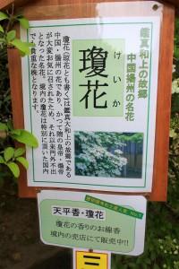 瓊花の看板