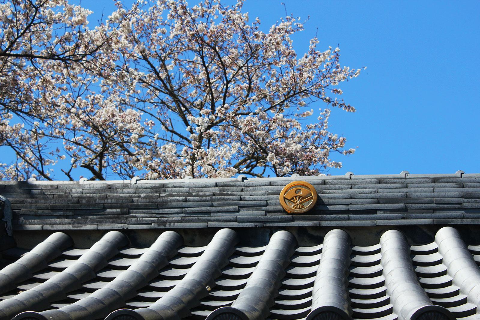菊蓮寺山門